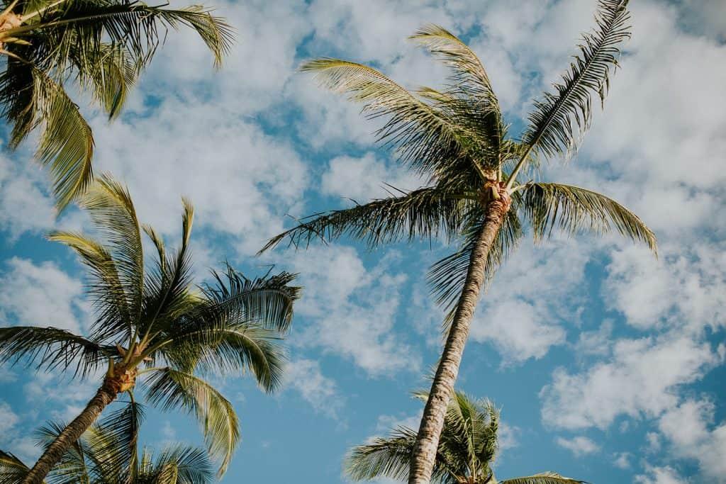 hilton waikoloa, hilton waikoloa wedding, hawaii photographers big island, hawaii photography blog, hawaii based photographer, hawaii beach photographer, hawaii best photography locations, hawaii family photographers big island, hawaii wedding photography costs, hawaii photography engagement, hilton waikoloa wedding venue, kona hawaii family photographer, hawaii honeymoon photographer, photographer in hawaii, hawaii photographer in honolulu, hawaii kauai photographer, hawaii photography locations, hawaii wedding photographer oahu, hawaii pro photography maui, bigisland wedding venue