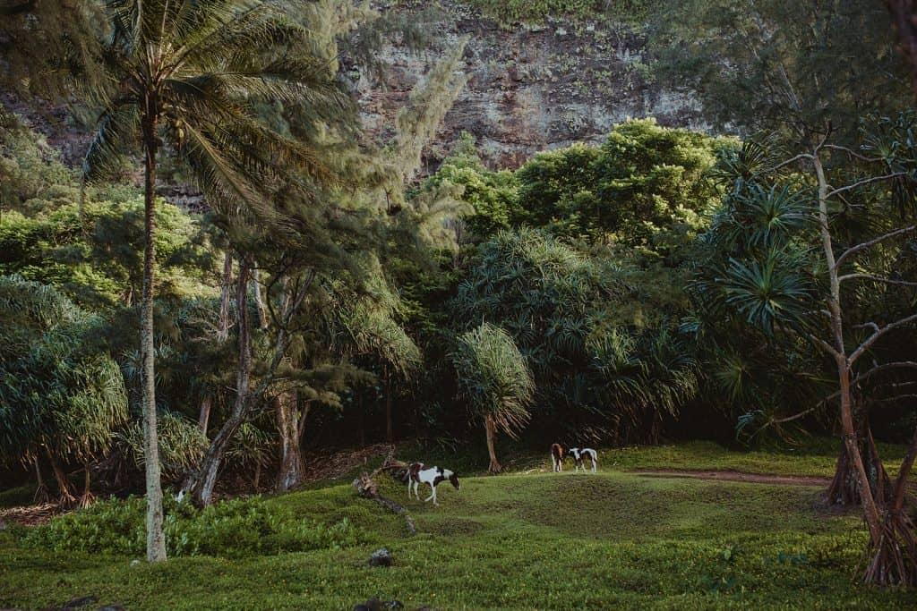 family photo session, waipio valley, big island family photo session, big island photographer, waipio valley photo session, waipio valley horses