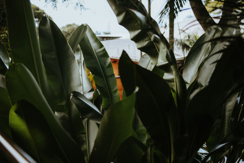 holualoa inn, Holualoa inn weddings, big island photographers, big island wedding venue, hawaii wedding muah, bliss n bloom, bliss n bloom weddings, bliss n bloom wedding planners, big island wedding planners, grace flowers hawaii